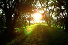 Sun im grünen Frühlingspark Stockbilder
