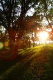 Sun im grünen Frühlingspark Stockfotos