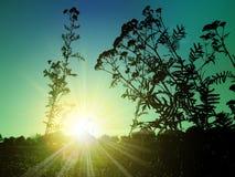 Sun im Gras Stockbilder