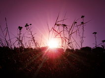 Sun im Gras Stockbild