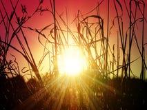 Sun im Gras Lizenzfreies Stockbild