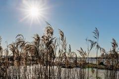 Sun im Himmel und im Gras Lizenzfreies Stockfoto