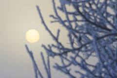 Sun im Nebel und im Schnee umfasste Niederlassungen Lizenzfreies Stockfoto