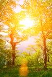 Sun im Wald Lizenzfreies Stockbild