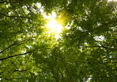 Sun In Deep Forest Royalty Free Stock Photos