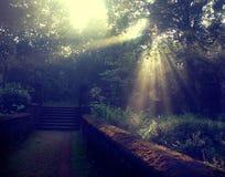 Sun irradia árvores completas e verdes Fotografia de Stock
