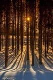 Sun irradia através das árvores de uma floresta com sombras longas Imagens de Stock Royalty Free