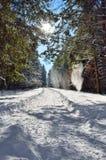 Sun irradia através das árvores na floresta do inverno Fotos de Stock