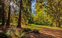 Sun irradia do sol brilhante que brilha entre as árvores da GR Imagem de Stock Royalty Free