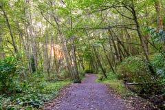 Sun irradia el filtro a través del toldo de bosque en pista de senderismo imagenes de archivo