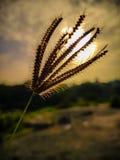 Sun irradia el sol hermoso del paisaje del paisaje de la hierba de la puesta del sol Foto de archivo