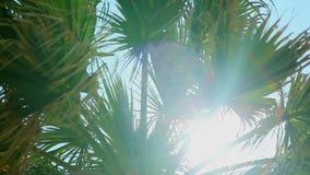 Sun irradia en las hojas de una palmera contra el cielo azul metrajes