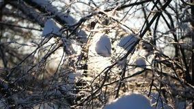 Sun irradia o brilho através das árvores do inverno vídeos de arquivo