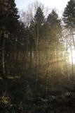 Sun irradia o córrego através da floresta Imagens de Stock