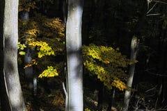 Sun irradia penetrando el bosque imagen de archivo libre de regalías