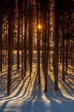 Sun irradia a través de los árboles de un bosque con las sombras largas Imágenes de archivo libres de regalías