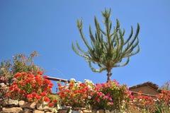 Sun island is located on lake Titicaca. Stock Photos