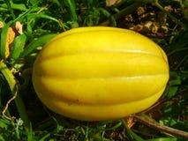 Sun Jewel Melon Royalty Free Stock Photography