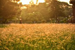 Sun-kissed grass stock images