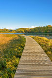 Sun Lake and plank path in the autumn Royalty Free Stock Photos