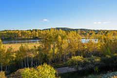 Sun Lake and White Birch in the autumn Stock Image