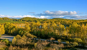 Sun Lake and White Birch in the autumn Royalty Free Stock Image