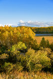 Sun Lake and White Birch in the autumn Stock Photo