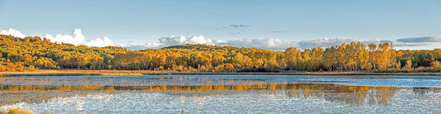 Sun Lake and White Birch in the autumn Stock Photography