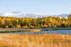 Sun Lake and White Birch in the autumn Royalty Free Stock Photos