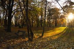 Sun lampor i höstpark med bänken Arkivfoton