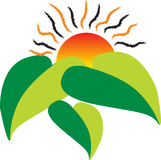 Sun leaf. Illustration art of leaf and sun rays with white background Royalty Free Stock Photos
