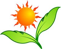 Sun leaf Royalty Free Stock Images