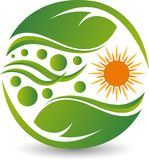 Sun leaf logo. Illustration drawing art a sun leaf logo  with white background Stock Photo