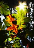 Sun for leaves Royalty Free Stock Photos
