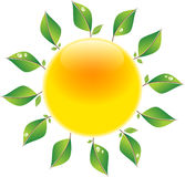 Sun with leaves. Abstract glossy sun shining with green fresh leaves on white background. Vector illustration Royalty Free Stock Photography