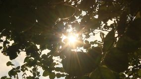 Sun through the leaves stock video footage