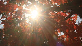 Sun through the leaves stock video