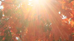 Sun through the leaves stock footage