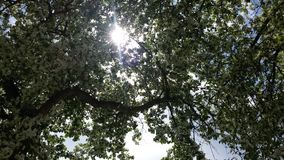 Sun through leaves of blooming tree Royalty Free Stock Images