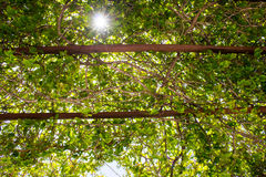 The sun in the leaves and branches of trees Royalty Free Stock Image