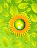 Sun with leaves. Nature concept Royalty Free Stock Image