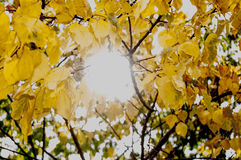 Sun and leaves royalty free stock image
