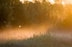 Sun-Leuchte. Lizenzfreie Stockfotos