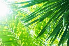 Sun-Licht durch Palme verzweigt sich tropischer Sommer-Hintergrund Lizenzfreie Stockfotos