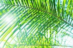 Sun-Licht durch Palme verzweigt sich tropischer Sommer-Hintergrund Lizenzfreies Stockfoto
