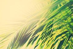 Sun-Licht durch Palmen-Niederlassungen Glücklicher Mann genießt an den Feiertagen in dem Meer Stockbilder