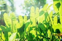 Sun-Licht durch tropischen Urlaub-Betriebssommer-Tag Stockbilder