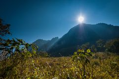 Sun-Licht- und -gebirgswald Stockfotografie
