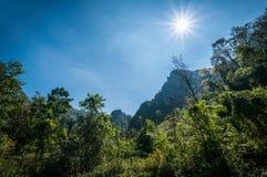 Sun-Licht- und -gebirgswald Lizenzfreie Stockbilder