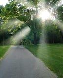 Sun-Lichtstrahl Stockbild